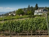westside-wine-trail-6