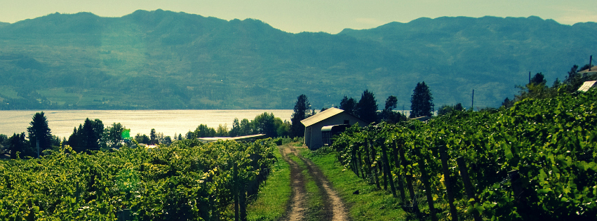 Okanagan Wineries | Okanagan Map | Little Straw Vineyards
